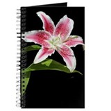 Stargazer Lily Journal
