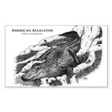 American Alligator Rectangle Decal