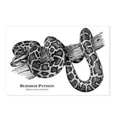Burmese Python Postcards (Package of 8)