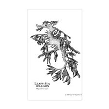 Leafy Sea Dragon Rectangle Decal