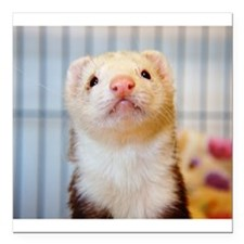 "Silly Ferret Square Car Magnet 3"" x 3"""