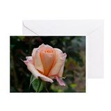 First Pres Rose Garden Greeting Cards (Pk of 10)