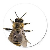 Cute Honey Round Car Magnet
