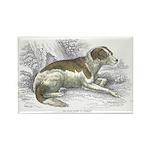 Boar Hound Dog Rectangle Magnet (10 pack)