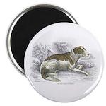 Boar Hound Dog Magnet