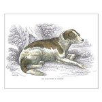 Boar Hound Dog Small Poster