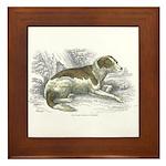 Boar Hound Dog Framed Tile