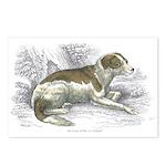 Boar Hound Dog Postcards (Package of 8)