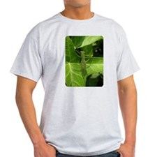 Praying Mantis, Mantid Ash Grey T-Shirt