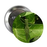 "Praying Mantis, Mantid 2.25"" Button (100 pack)"