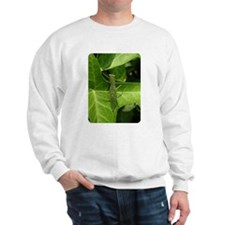Praying Mantis, Mantid Sweatshirt
