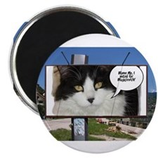 "Political Cat Humor 2.25"" Magnet (100 pack)"