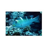 BigEye Emperor Rectangle Magnet (100 pack)