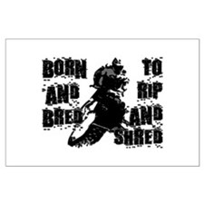 Born And Bred Large Poster
