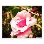 Pink Plantation Rose King Duvet