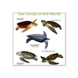 Sea Turtles of the World Sticker