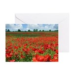Poppy Fields Greeting Cards (Pk of 20)