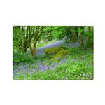 Bluebell Woods.jpg Rectangle Magnet