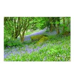 Bluebell Woods.jpg Postcards (Package of 8)