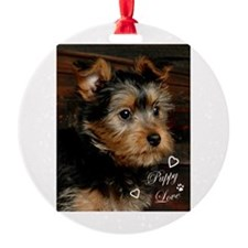 silky terrier close up.png Ornament