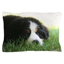 Bernese Puppy Pillow Case
