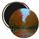 Dreamy Fall New England Drive Magnet