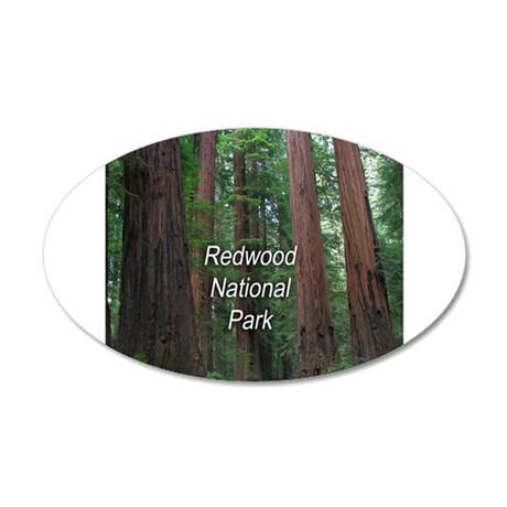 Redwood National Park 20x12 Oval Wall Decal