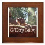 Black Footed Wallaby Framed Tile