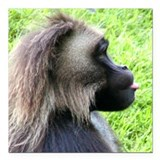 "BABOON EXPRESSION Square Car Magnet 3"" x 3"""