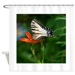 .swallowtail on candy lily. Shower Curtain