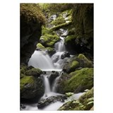 Cascading creek in temperate rainforest interior,