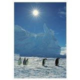 Emperor Penguins returning to Riiser-Larsen Rooker