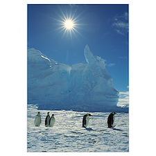 Emperor Penguins returning to Riiser-Larsen Rooker