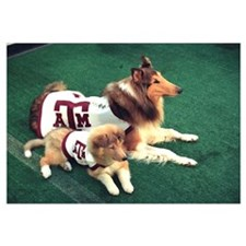 Texas A and M Pictures Reveille and Trainee