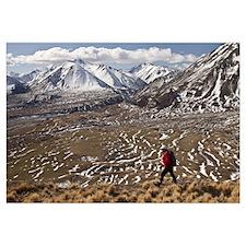 Hiker descends hill of Tussock Grass (Poa flabella