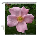 .light pink rose. Shower Curtain