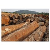 Logged timber from the tropical rainforest, Camero