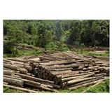 Logs in logging area, Danum Valley Conservation Ar