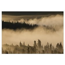 Morning fog near Swan Lake along the Alaska Highwa