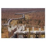 Oil pipeline crossing taiga, Alaska