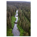 Stream and boreal forest, Tongass National Forest,