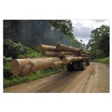 Truck with timber from a logging area, Danum Valle