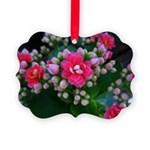 .pink kalanchoe. Picture Ornament