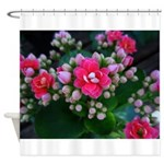 .pink kalanchoe. Shower Curtain