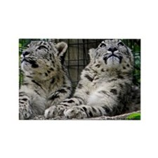 Snow Leopard Cubs Rectangle Magnet