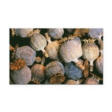 Dried opium poppies - Car Magnet