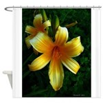 daylily daydreams v.3 Shower Curtain