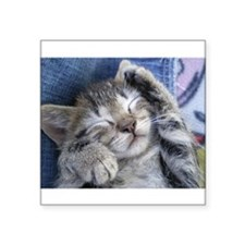 "Sleeping kitten 3 Square Sticker 3"" x 3"""