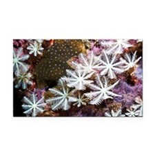 Soft coral - Car Magnet