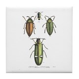Beetle Insects Tile Coaster